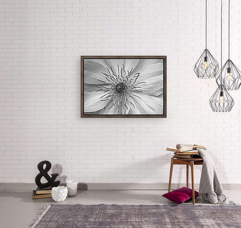 Clematis White  Art