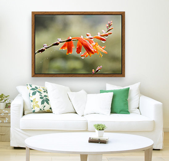 Orange Blooms with droplets  Art
