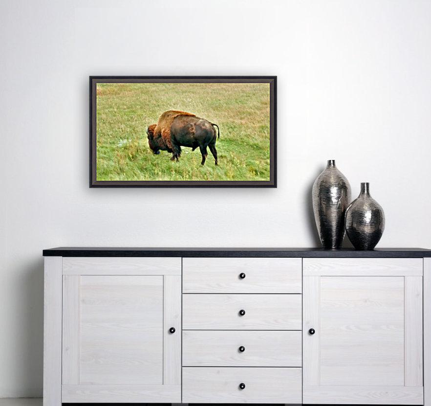 Lone Buffalo Custer State Park  Art