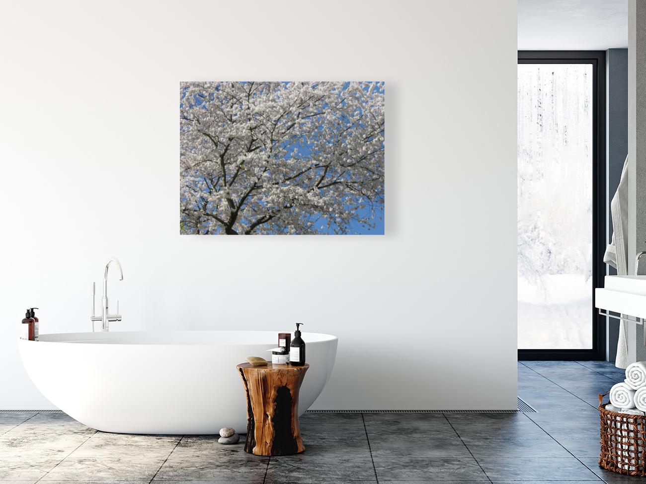 White Spring Blossoms Photograph  Art