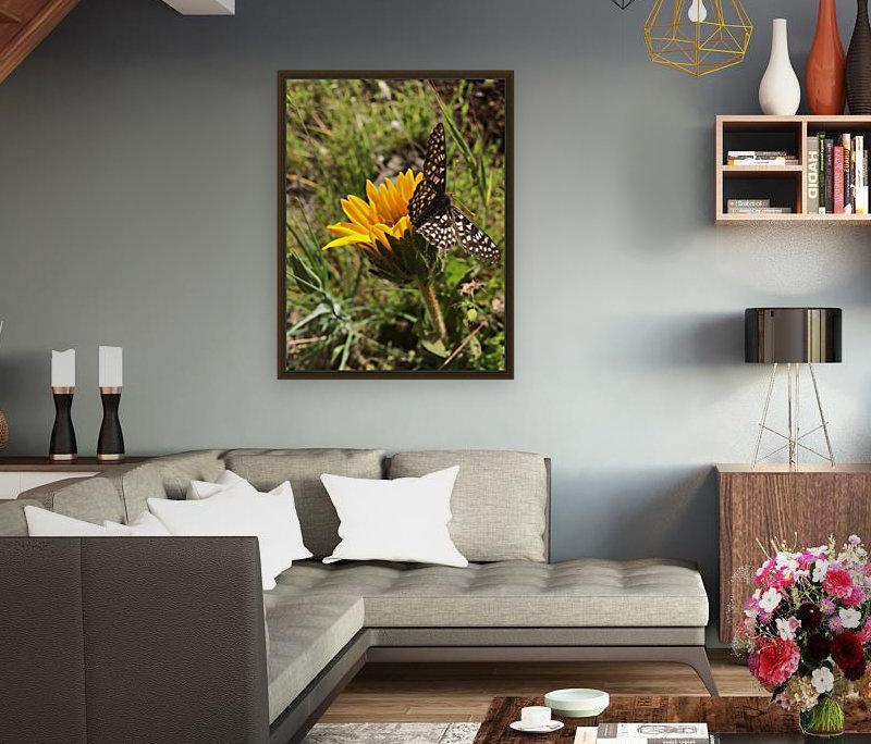 Butterfly on Arrowleaf   Art