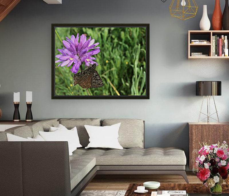 Butterfly on Wildflower  Art