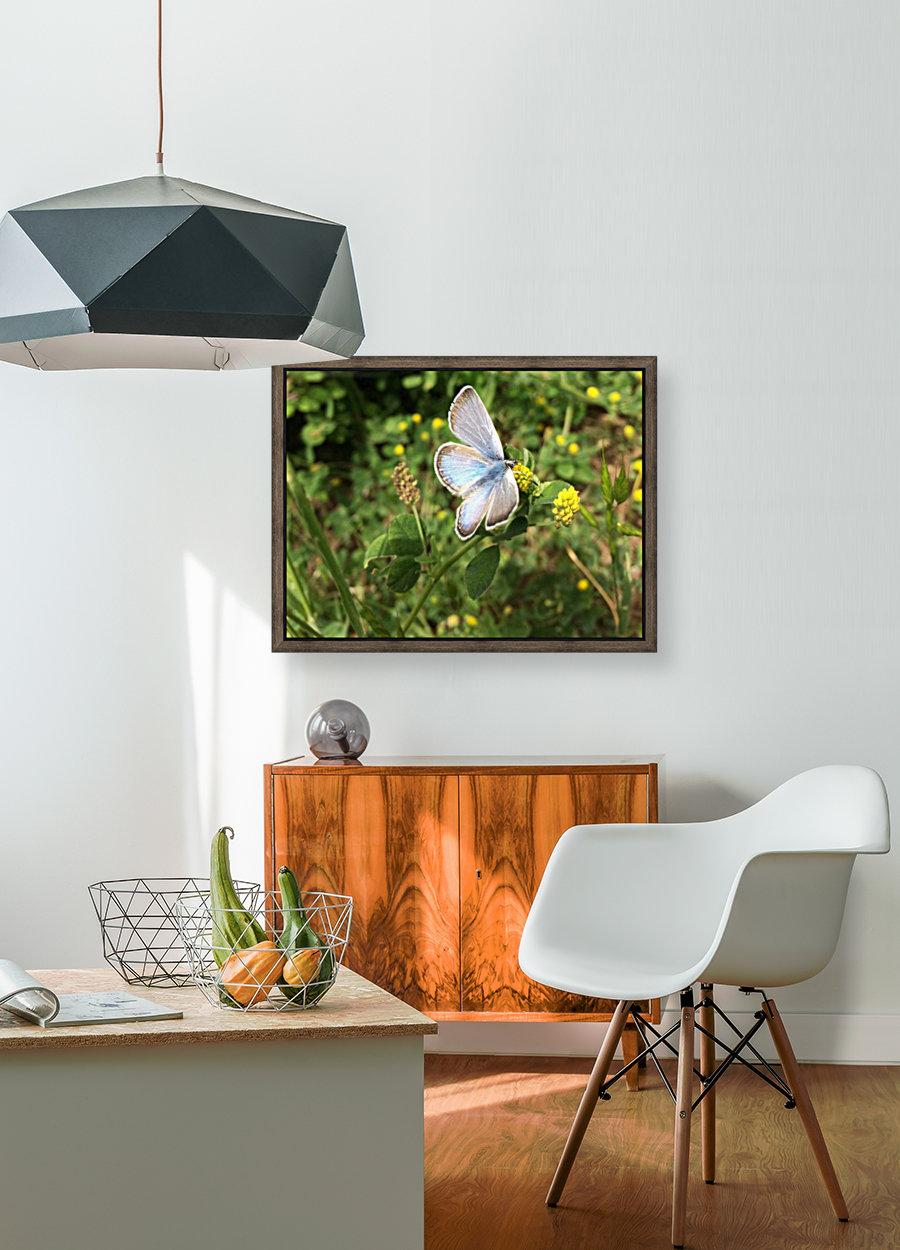 Blue Butterfly on Clover  Art