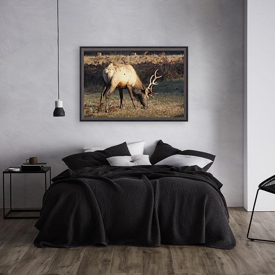 Roosevelt Elk  Art