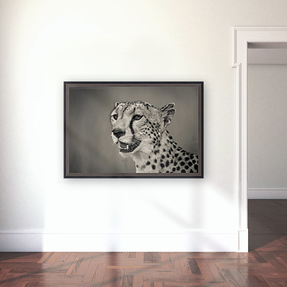 Cheetah Portrait with Floating Frame