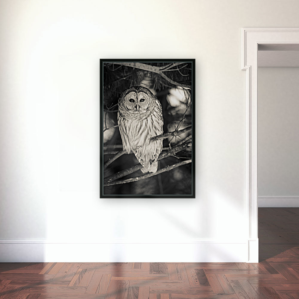 Spotted Owl - 2  Art