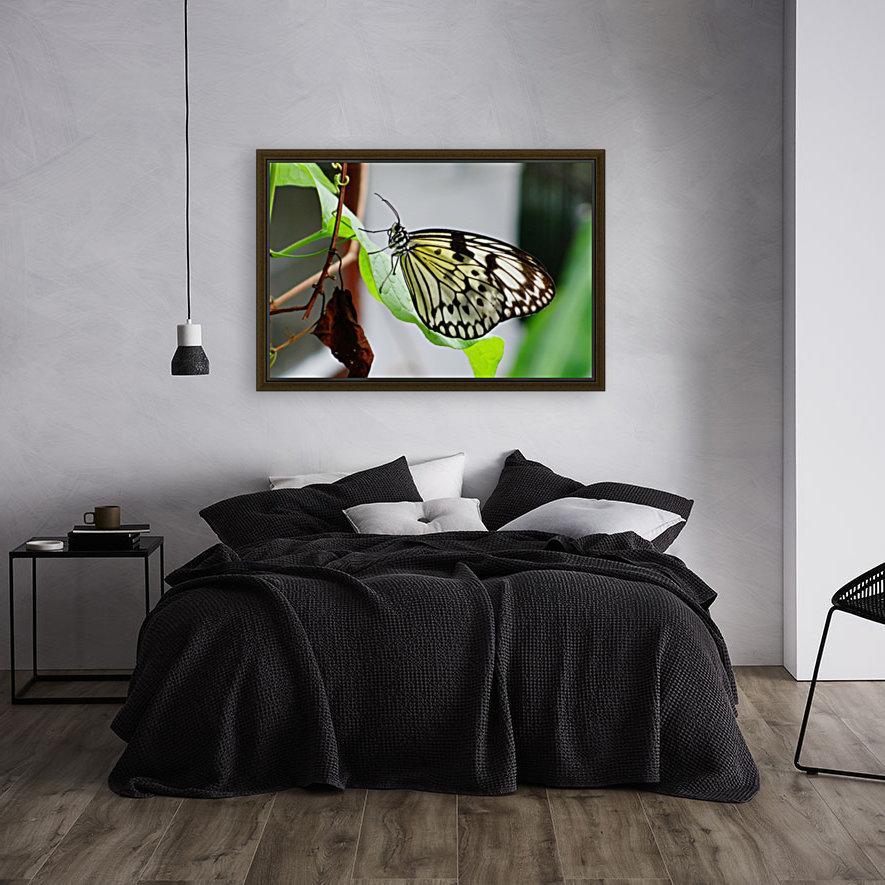 Resting Butterfly  Art