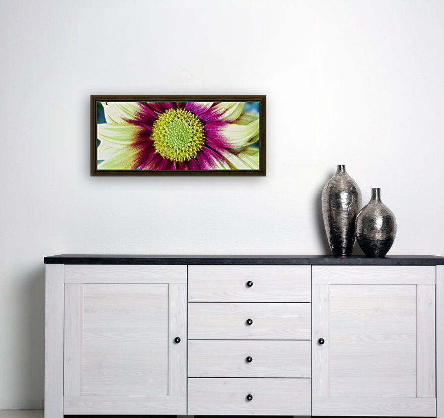 Chrysanthemum Daisy  Art