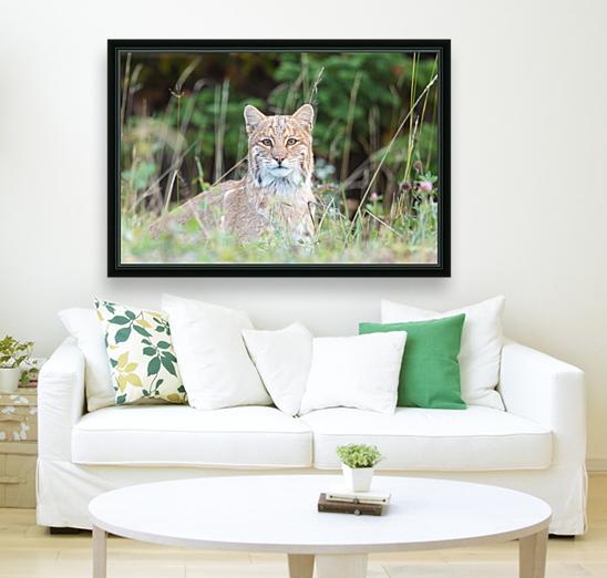 Wild Bobcat  Art