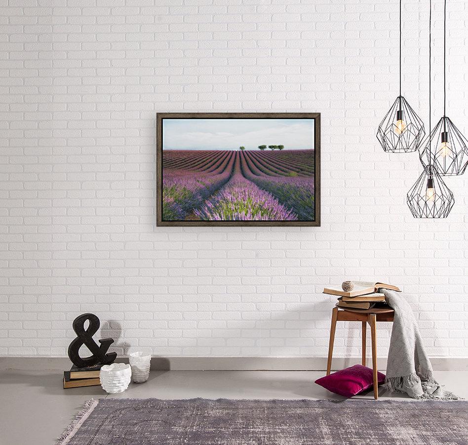 Velours de Lavender  Art