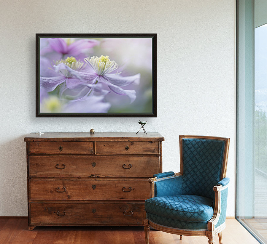 Clematis 'Mayleen' with Floating Frame