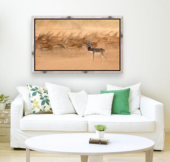 Black Bucks  Art