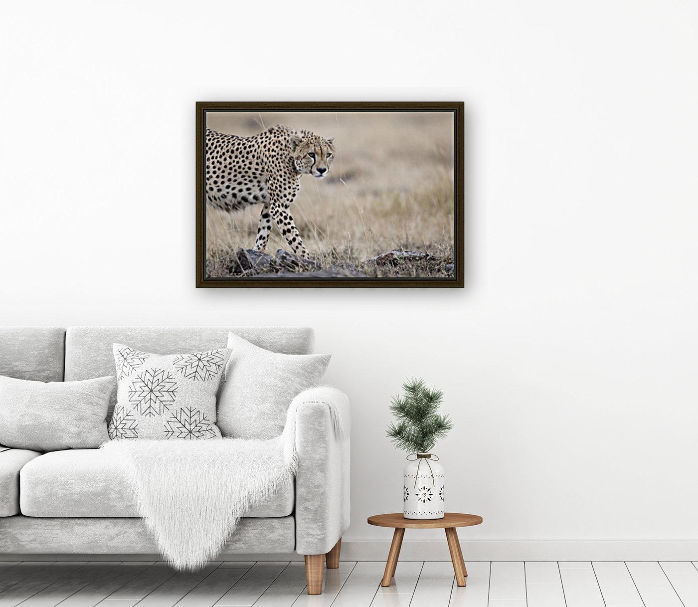 Cheetah Bro  Art