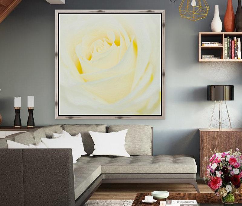 The White Rose  Art