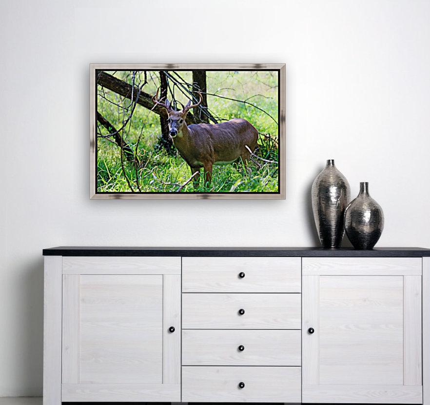 A Buck In The Grass  Art