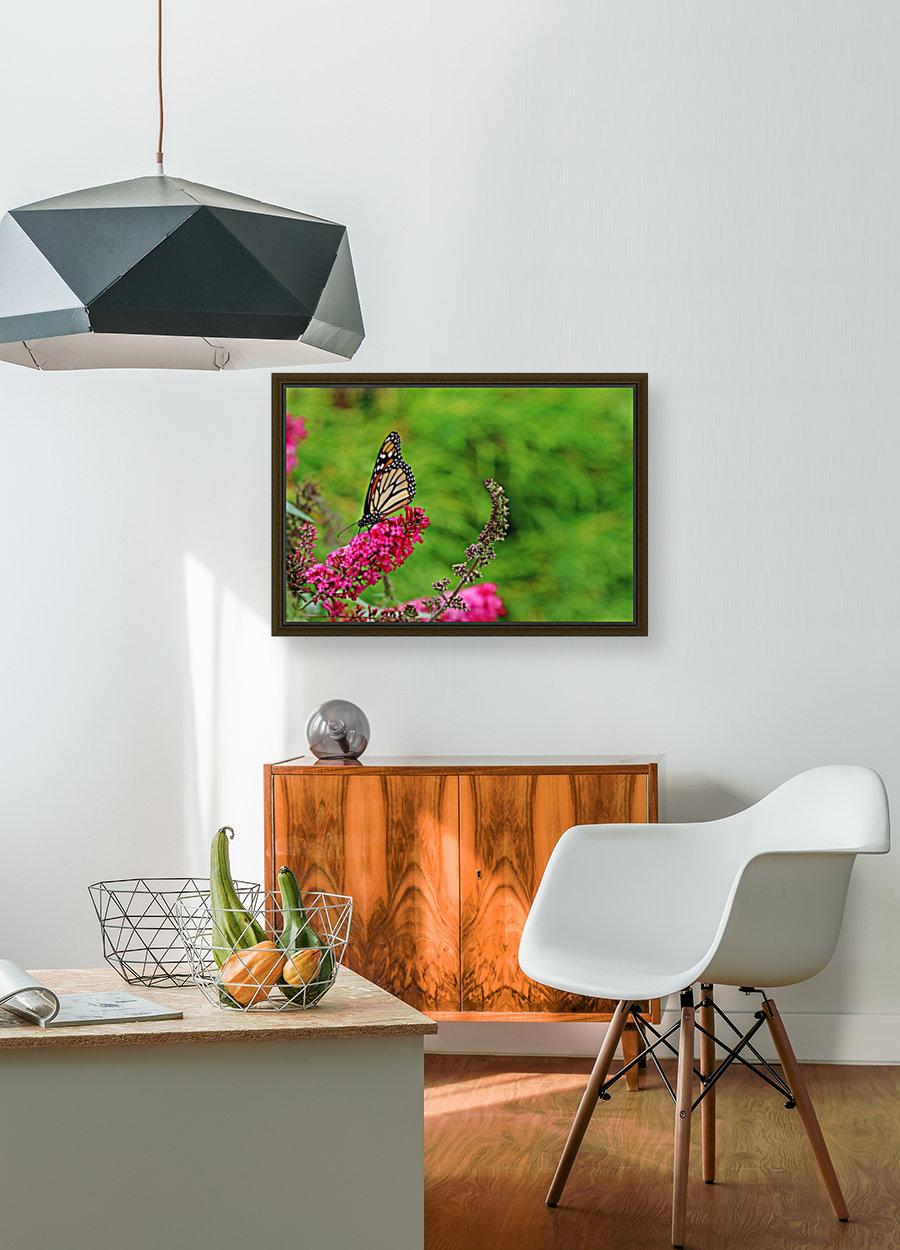 Monarch In The Garden  Art