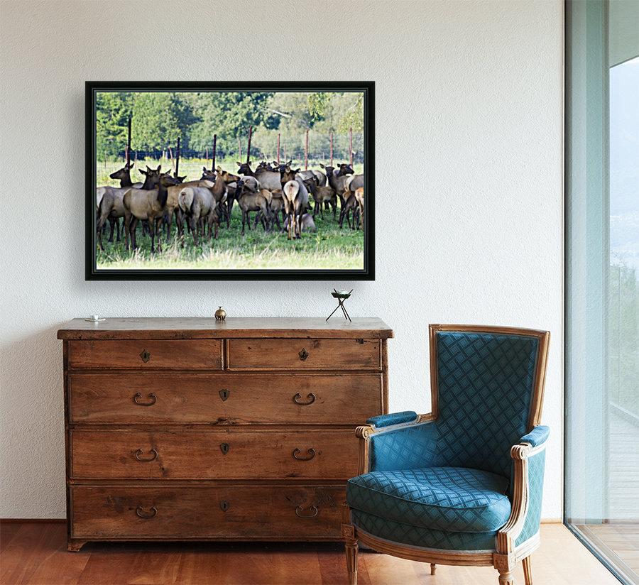 Elk Red Tailed Deer or Wapiti 16  Art