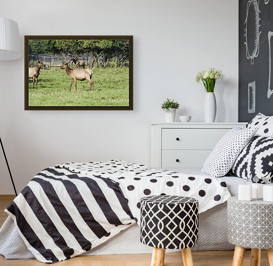 Elk Red Tailed Deer or Wapiti 4  Art