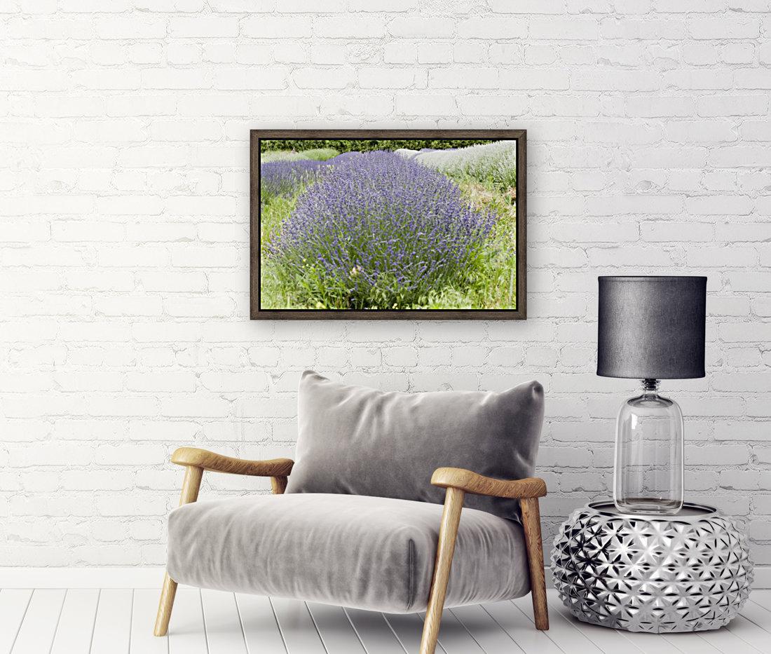 Lavender plants 1  Art