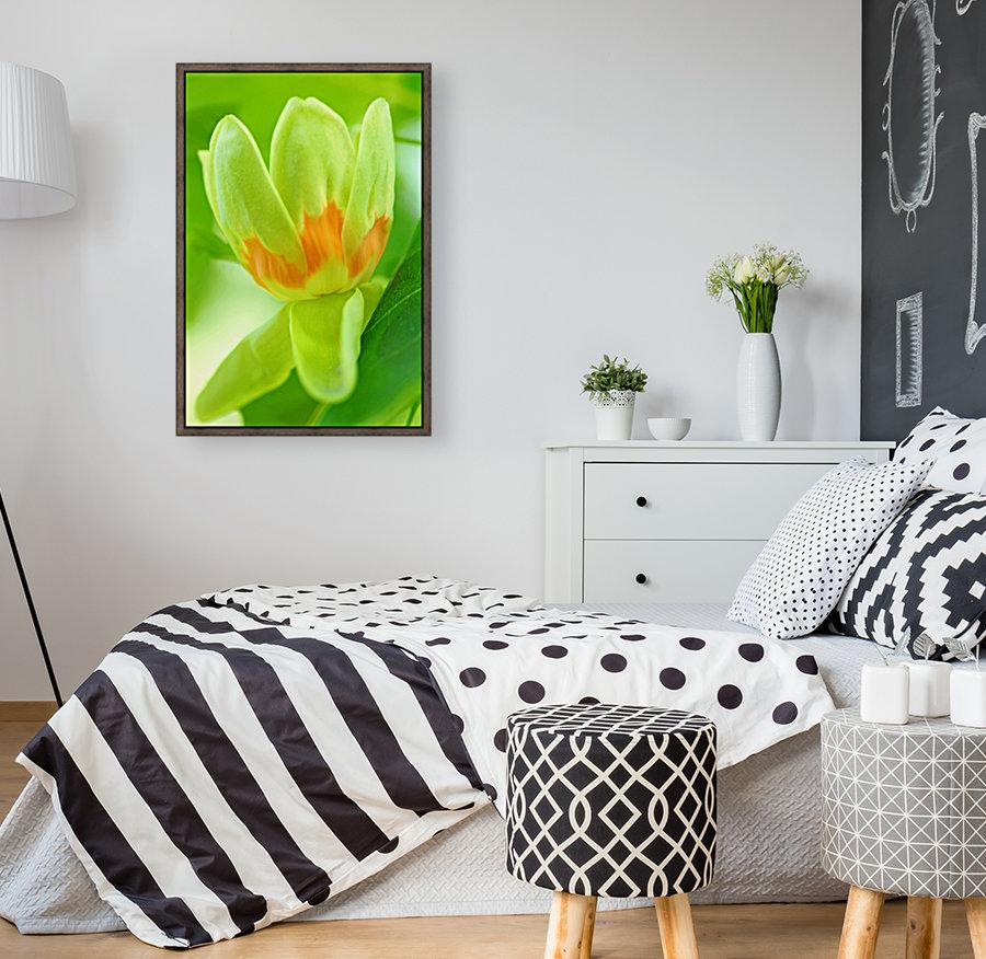 Tulip Poplar Flower  Art