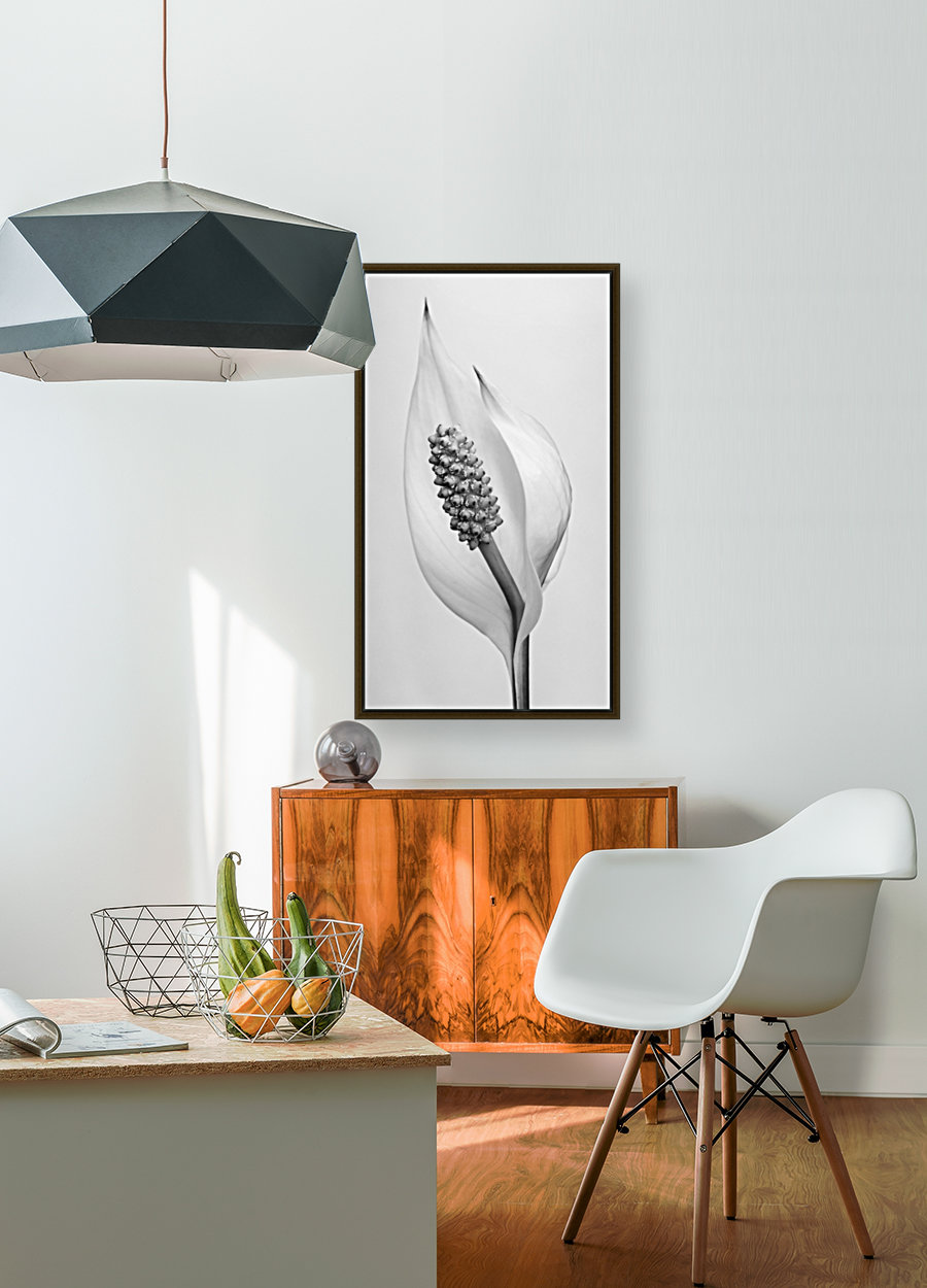 Peace lily  Art