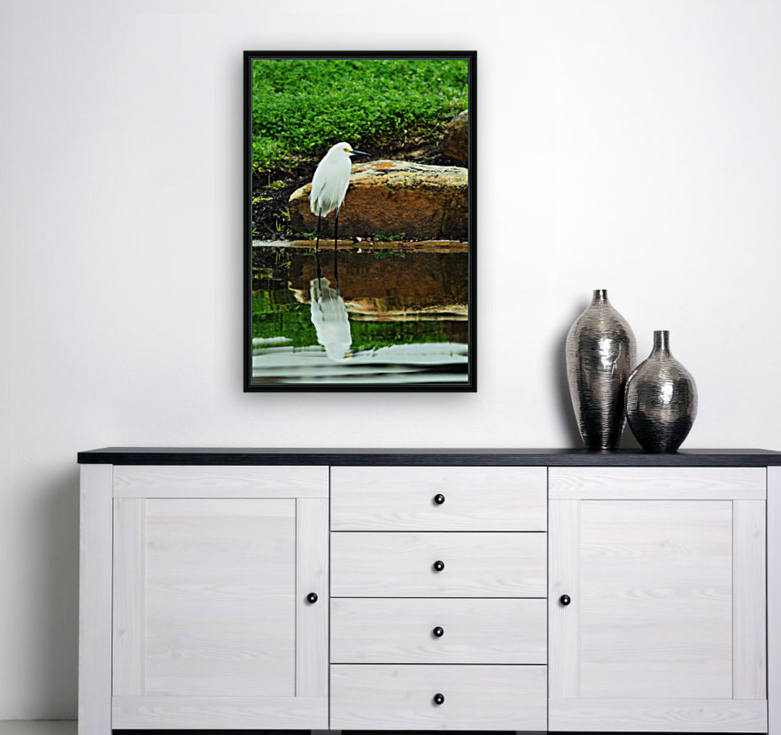 Snowy Egret with Floating Frame