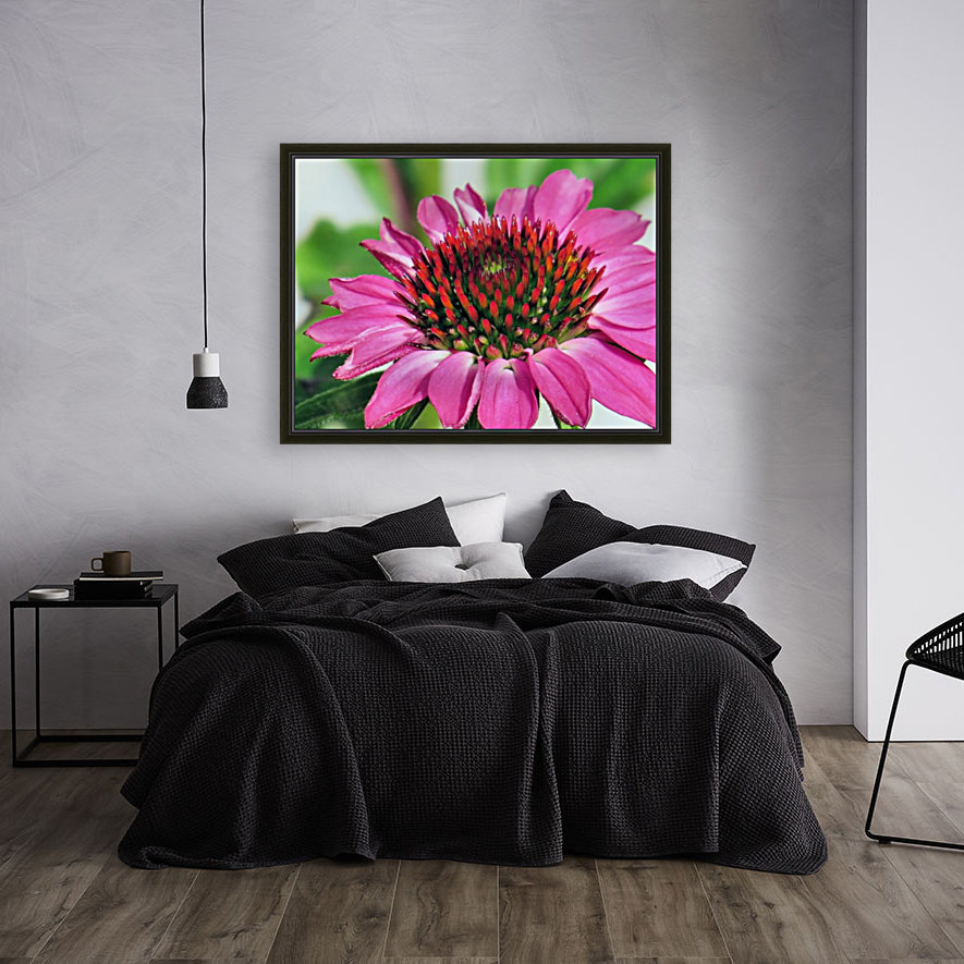 Pink coneflower   Art