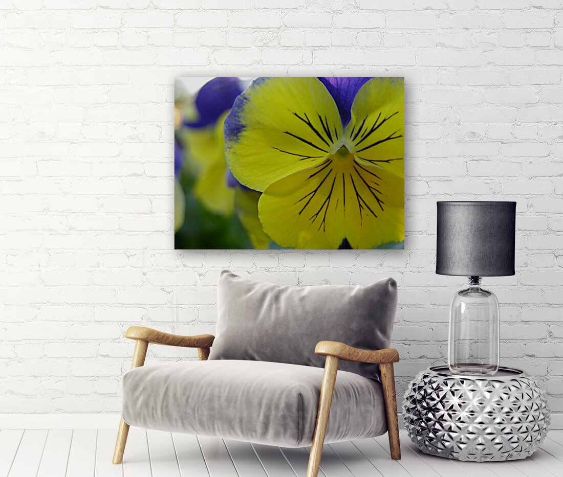 Yellow Pansy Photograph with Floating Frame