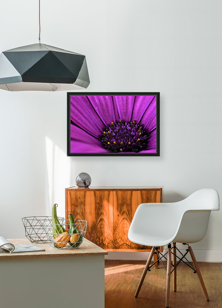 Purple Osteospermum Daisy Photograph Macro  Art