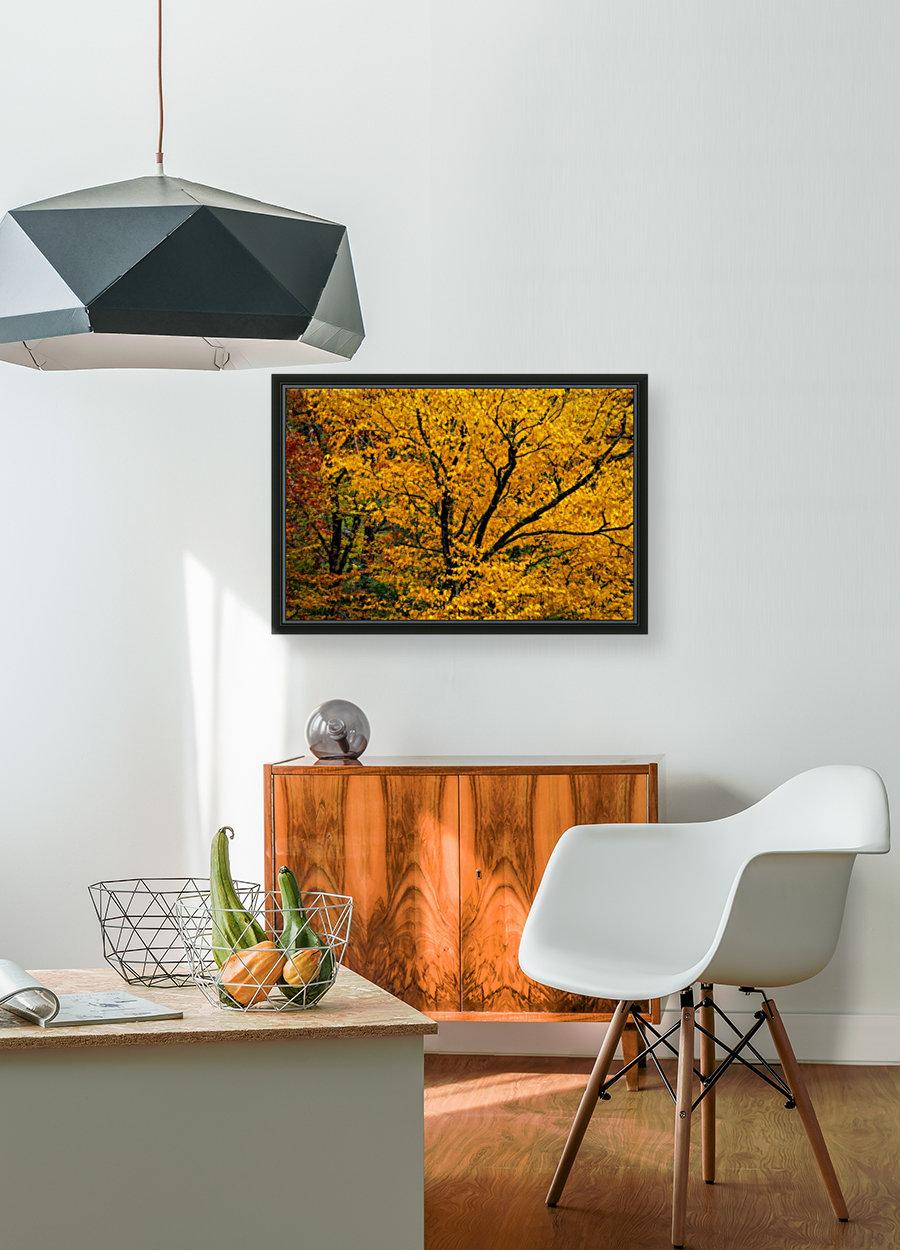 Yellow Tree Leaves  Art