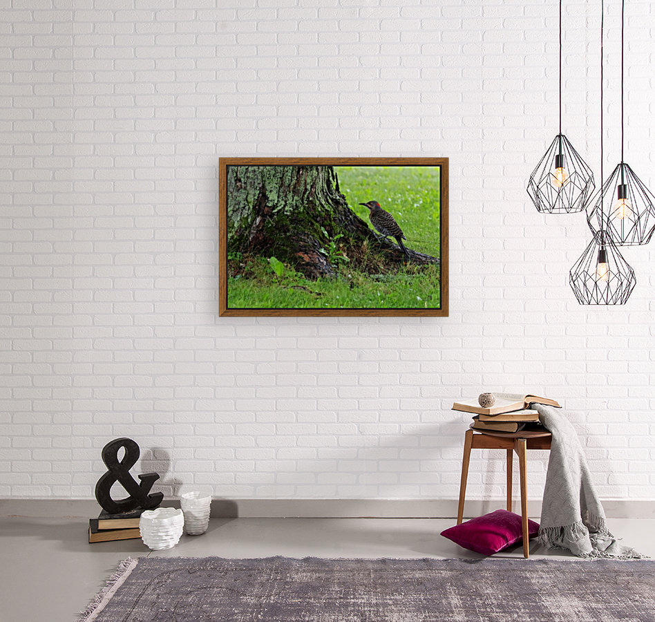 Pic flamboyant  with Floating Frame