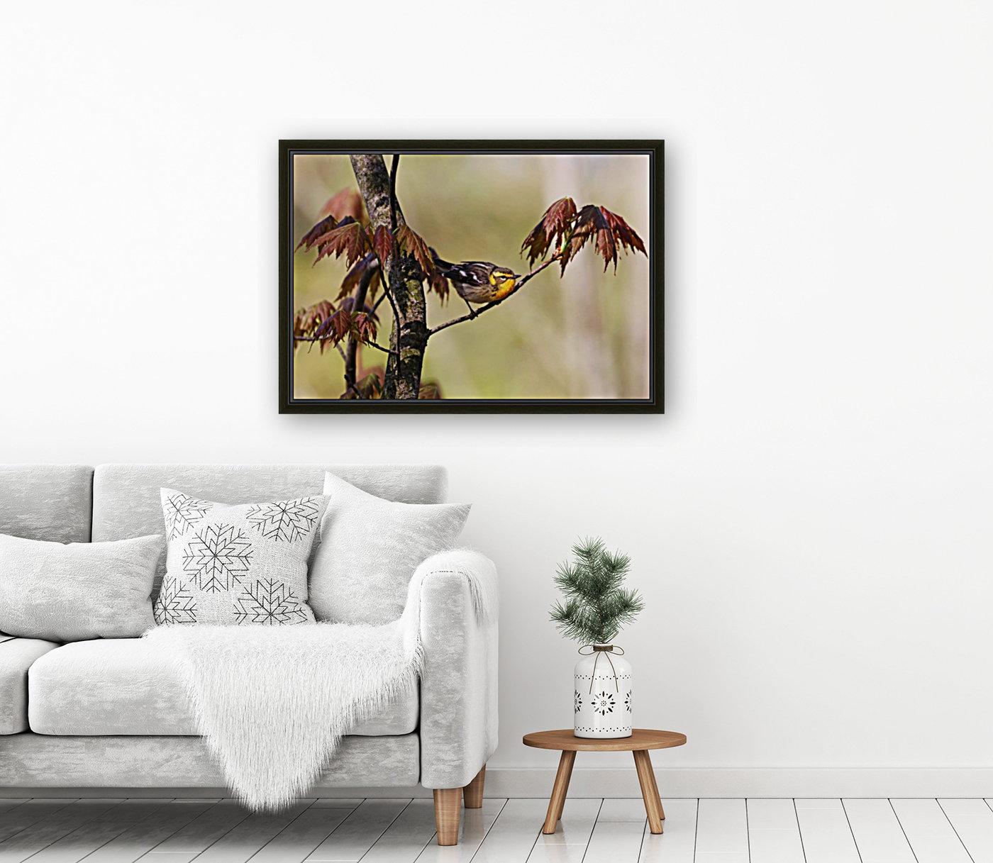 Blackburnian Warbler In Maple Tree  Art
