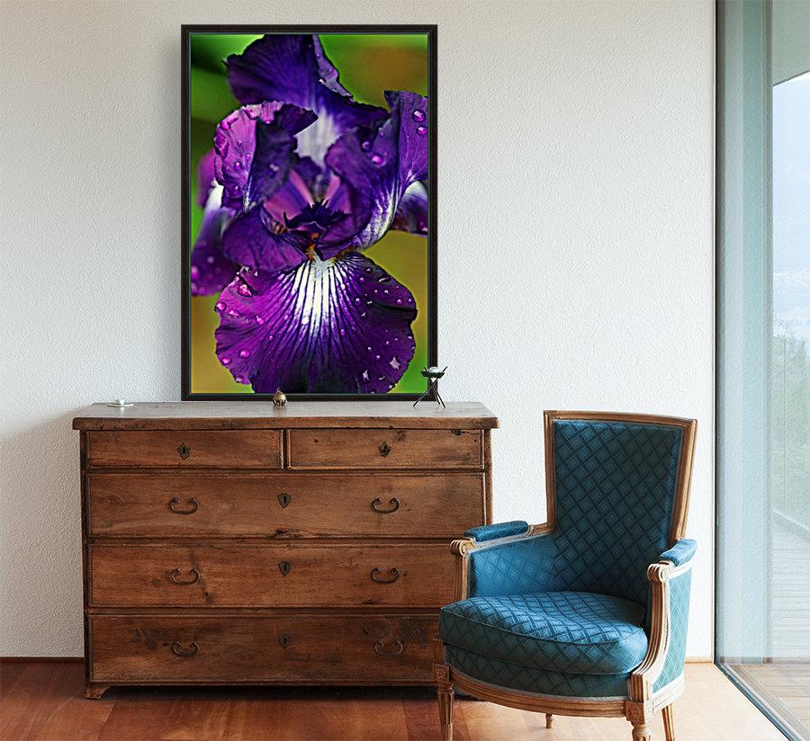 Purple With White Splash Iris  Art