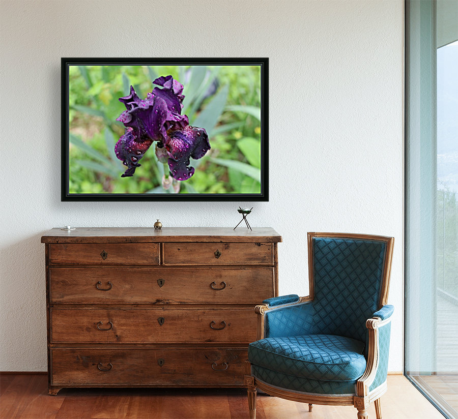 Purple Iris with Floating Frame
