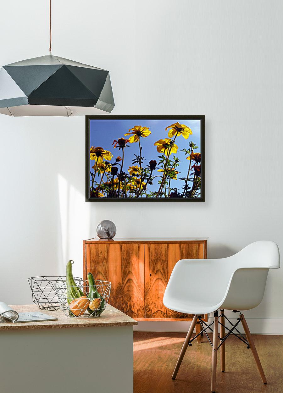 Summer Sky Flowers 1  Art