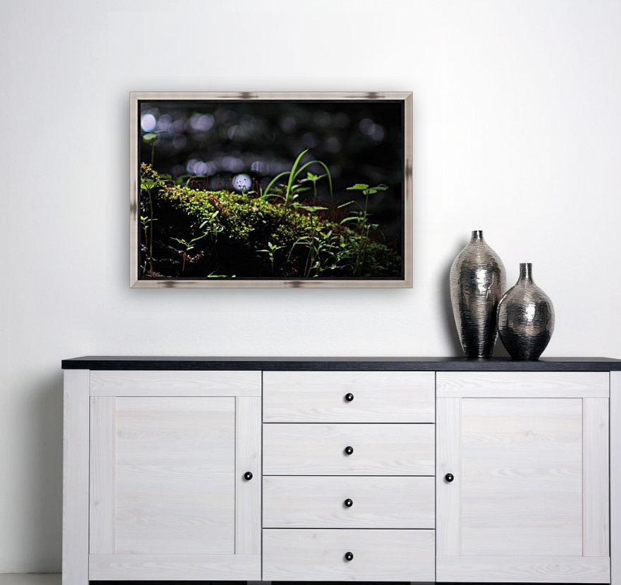 Beautiful Moss  Art