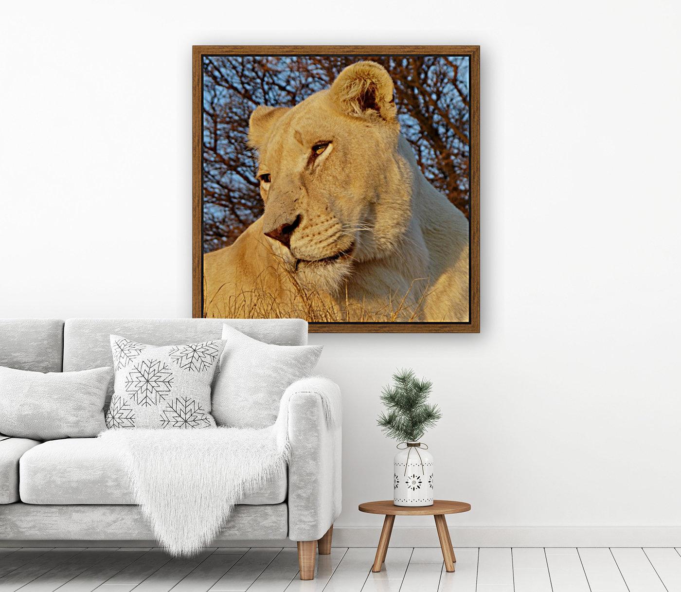 White Lioness Sunset 593  Art