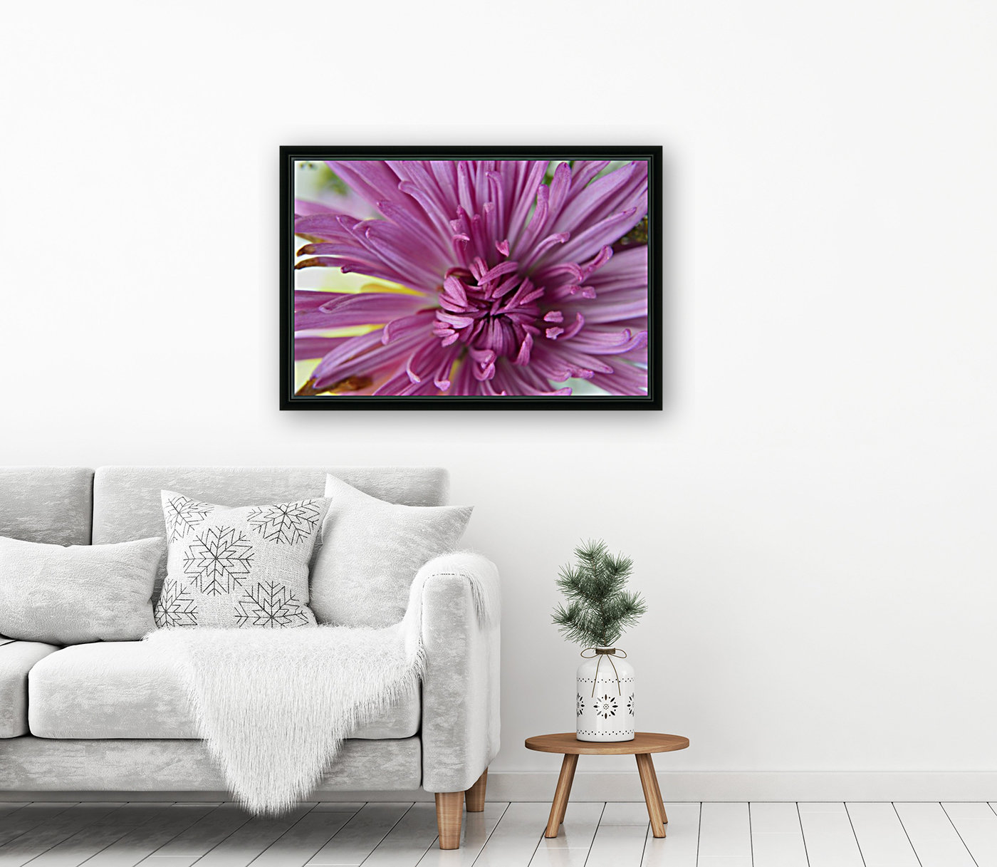 Fuscia-Colored Aster with Floating Frame