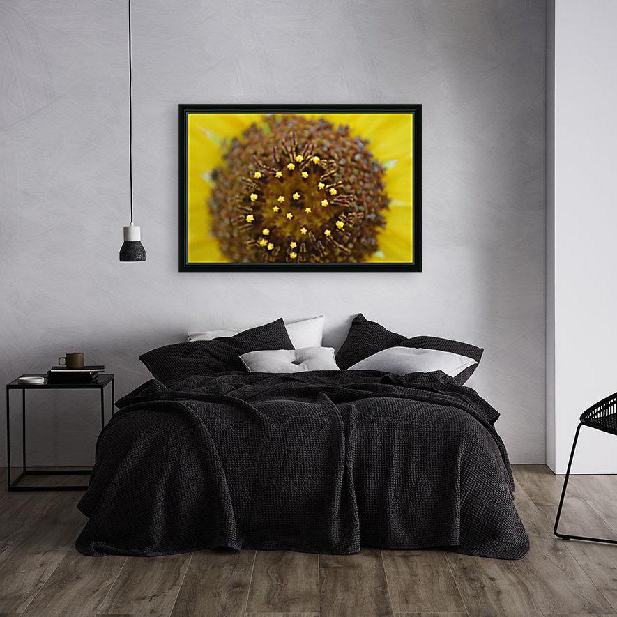 Sunflower Stars  Art