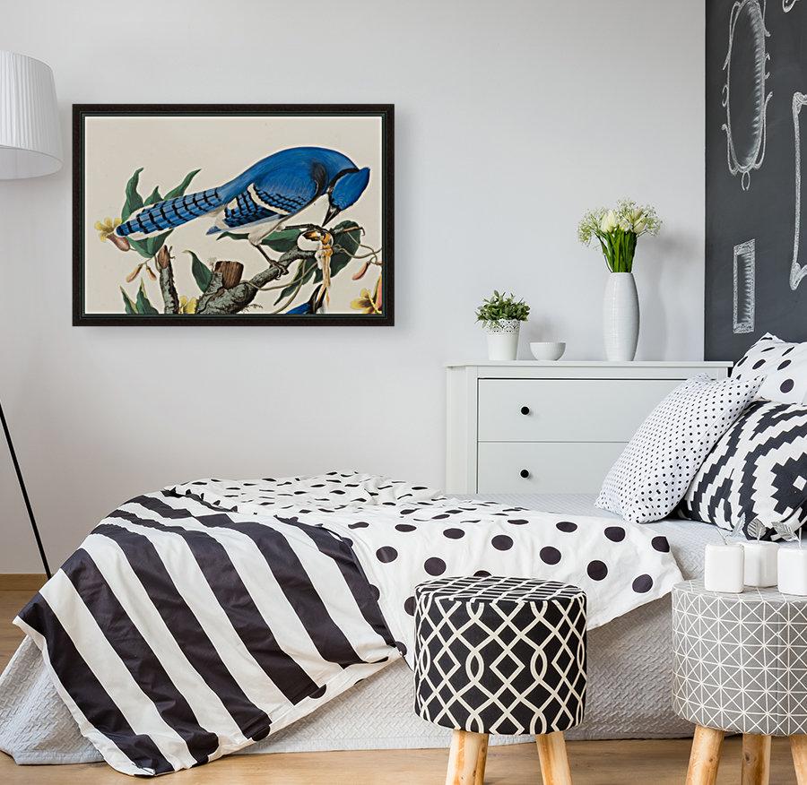 Blue Jay familly  Art