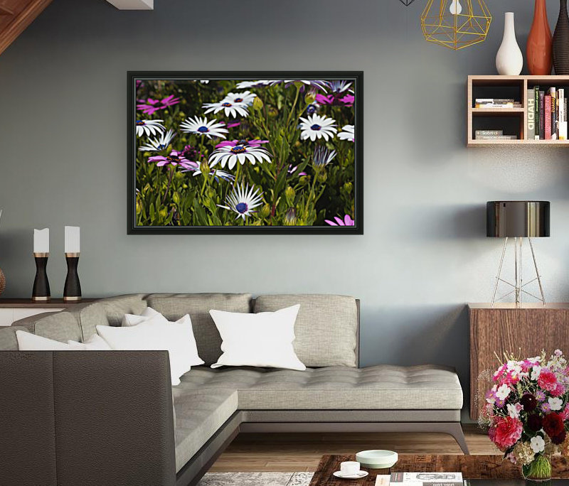 Daisies Of White And Pink  Art