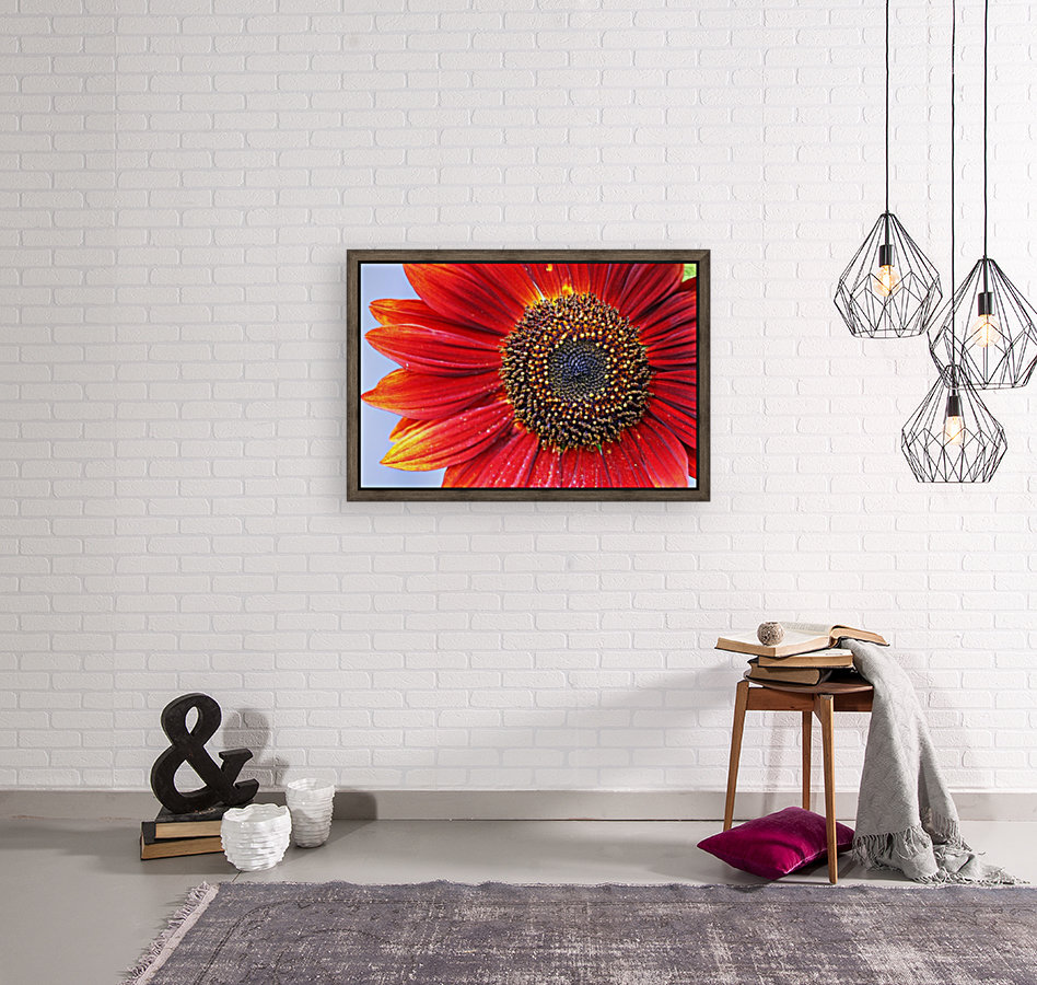 Ruby Red Sunflower with Floating Frame