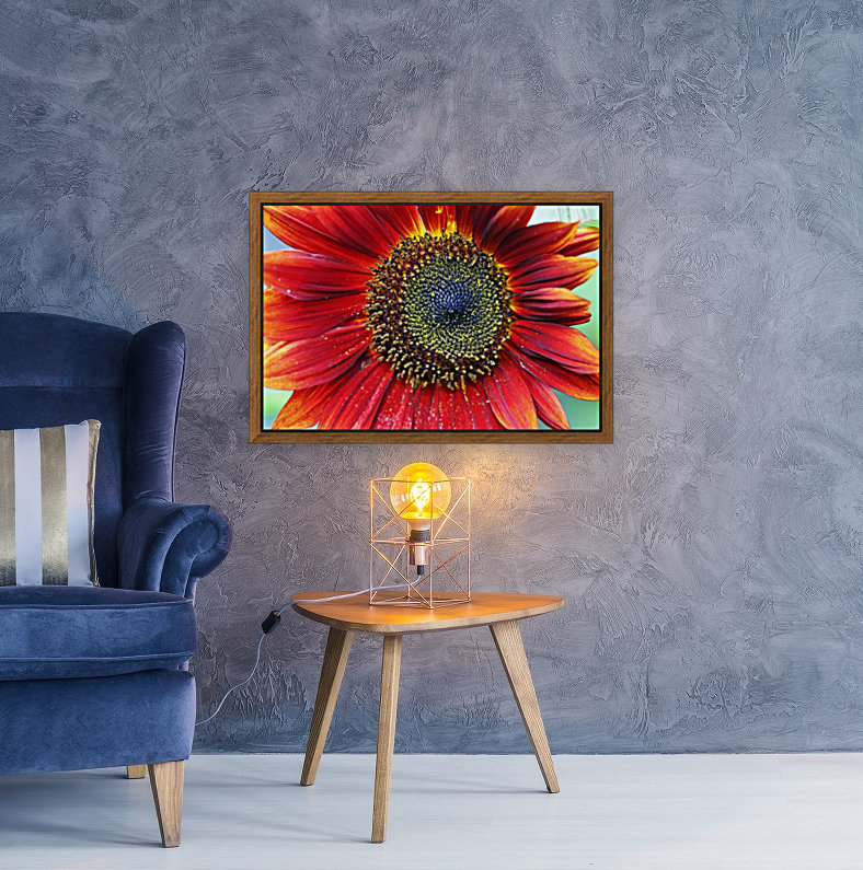 Red Sunflower With Yellow Tips  Art