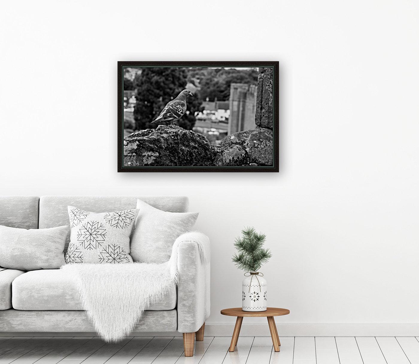 Black and White Pigeon  Art