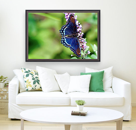 Red Spotted Purple Beauty  Art