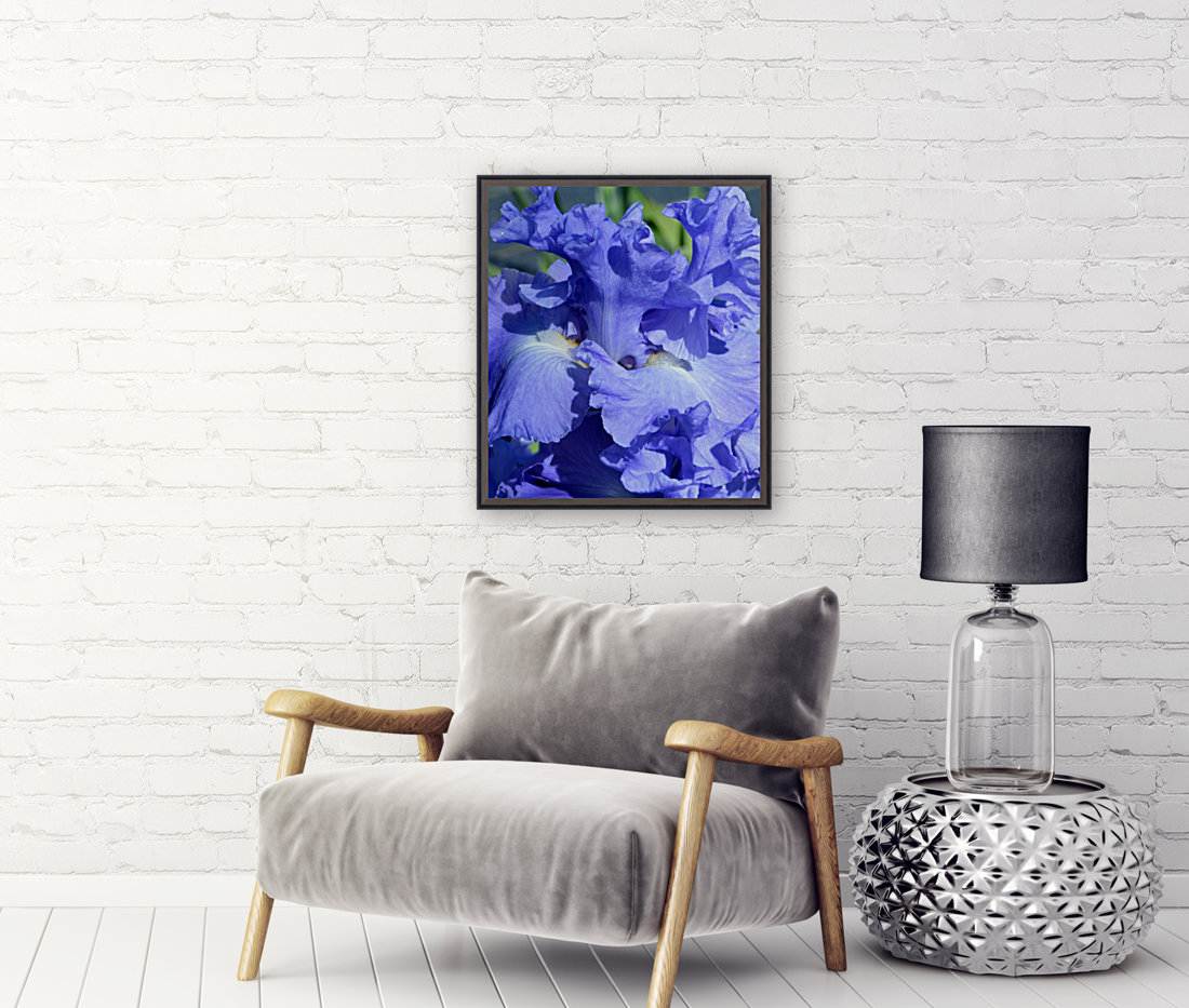 Metoleus Blue Bearded Iris  Art
