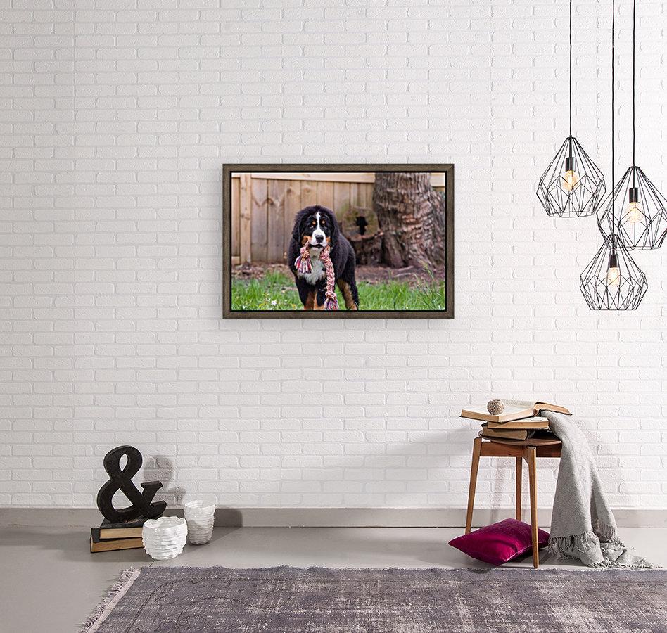 Bernese Mountain Dog Puppy 8  Art