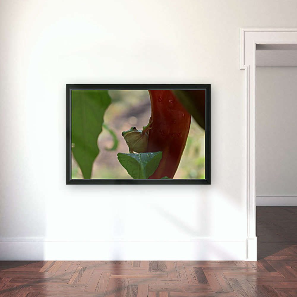 Peeping Frog with Floating Frame