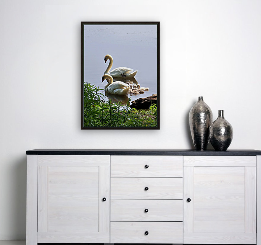 Swans and Sygnets on lake  Art