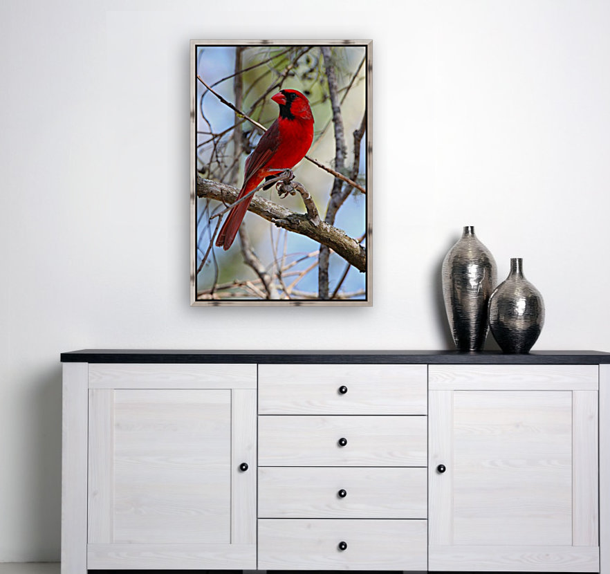 Cardinal in tree with Floating Frame